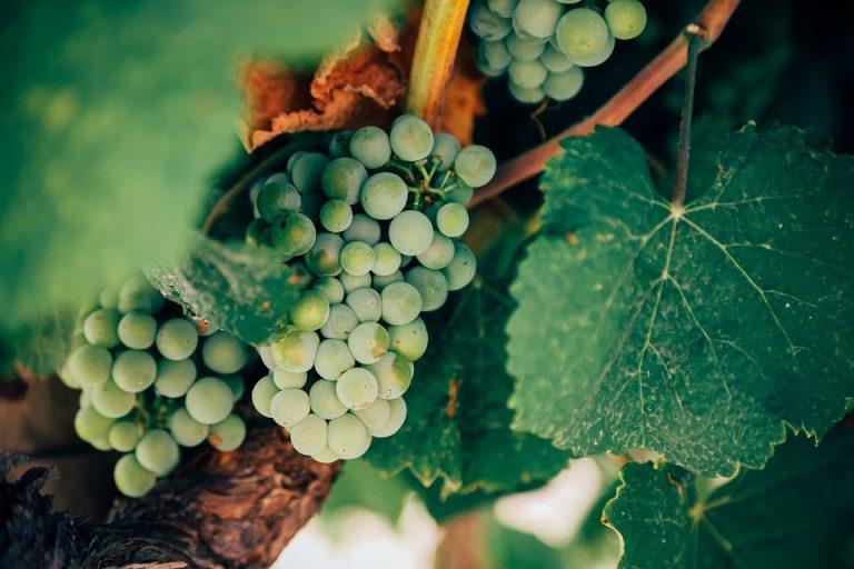 grapes-1245739_960_720